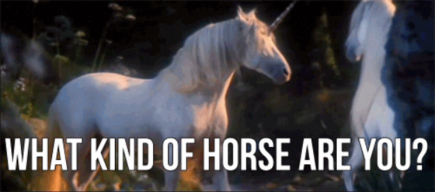 what kind of horse are you?