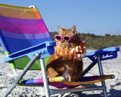 Un chat sur une plage.