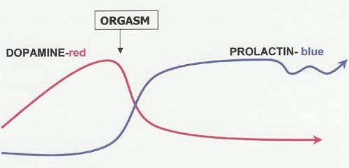 Les hormones du sex, prolactin et dopamine